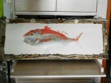 création Rose Citron encadrement bois flotté sur image poisson ©2013 Rose Citron