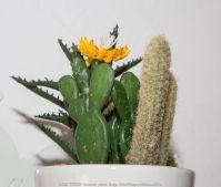farandole de cactus